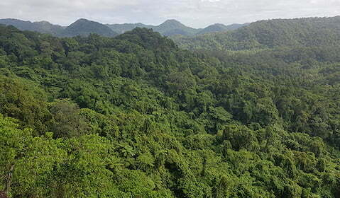 View of Drawa block forest in Fiji